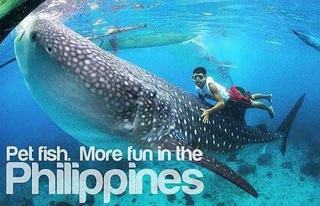 Pet Fish. More Fun in the Philippines.